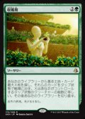 [JP][FOIL]《収穫期/Harvest Season(AKH)》