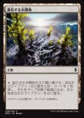 [EN][FOIL]《進化する未開地/Evolving Wilds(BFZ)》