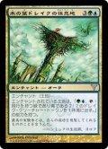 [JP][FOIL]《木の葉ドレイクの休息地/Leafdrake Roost(DIS)》