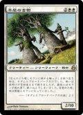 [JP][FOIL]《不屈の古樹/Indomitable Ancients(MOR)》