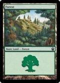 [EN][FOIL]《森/Forest(THS)》 246/249