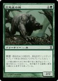 [JP][FOIL]《灰毛皮の熊/Ashcoat Bear(TSP)》